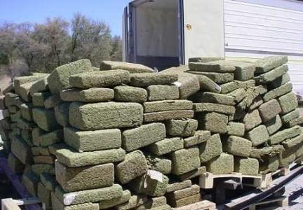 Whole lot of Marijuana