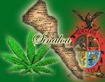 Legalizing marijuana in the U.S. would affect the Sinaloa Cartels Production!