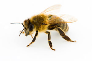 Is a bee the cure for HIV?